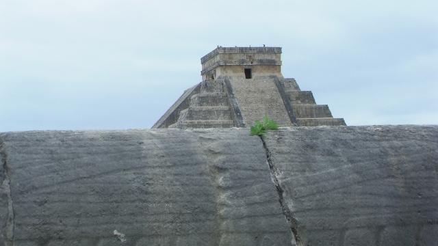 Maya 243