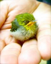 quetzalcoatl baby